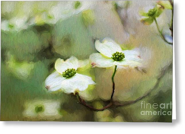 Dogwood Blooms Greeting Card by Darren Fisher