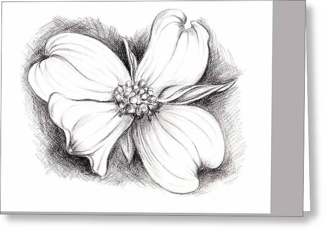 Dogwood Blossom Charcoal Greeting Card by MM Anderson