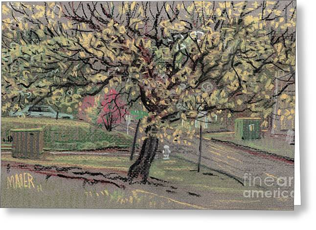 Dogwood Greeting Card by Donald Maier
