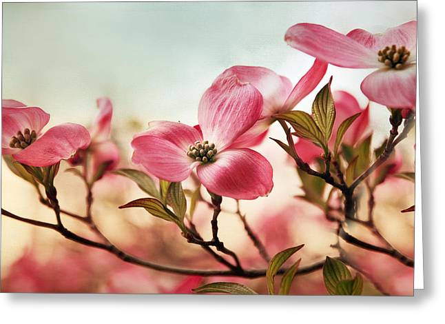 Dogwood Greeting Cards - Dogwood Dreams Greeting Card by Jessica Jenney