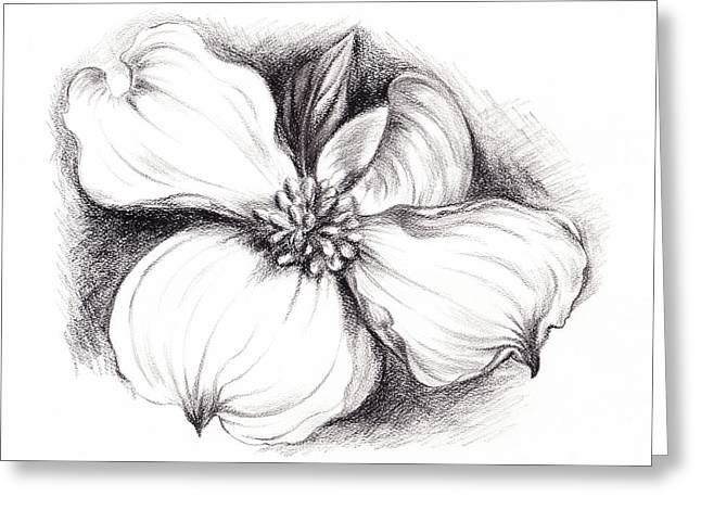 Dogwood Flower In Charcoal Greeting Card by MM Anderson