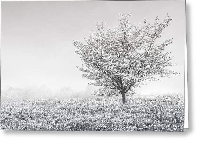 Field. Cloud Greeting Cards - Dogwood in the Mists Black and White Greeting Card by Debra and Dave Vanderlaan