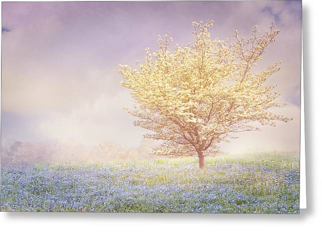 Field. Cloud Greeting Cards - Dogwood in the Mists Greeting Card by Debra and Dave Vanderlaan