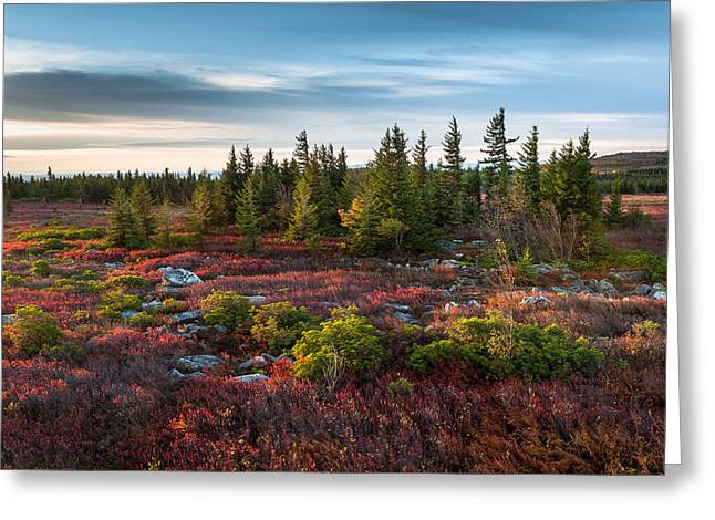 Dolly Sods Wilderness Greeting Cards - Dolly Sods Wilderness Area West Virginia Greeting Card by Mark VanDyke