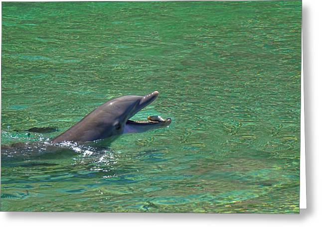 Ocean Mammals Greeting Cards - Dolphin catches the Fish Greeting Card by Pamela Walton