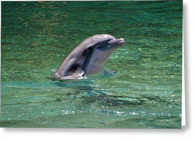 Ocean Mammals Greeting Cards - Dolphin is all Smiles Greeting Card by Pamela Walton