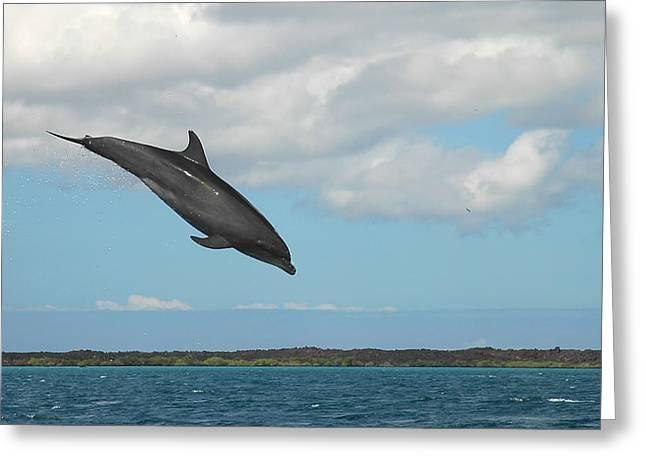 Dolphin Jump Greeting Card by Alan Lenk