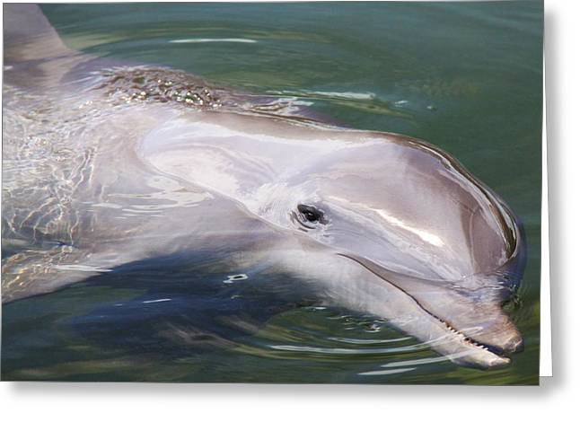 Smart Greeting Cards - Dolphin Greeting Card by Mitch Cat