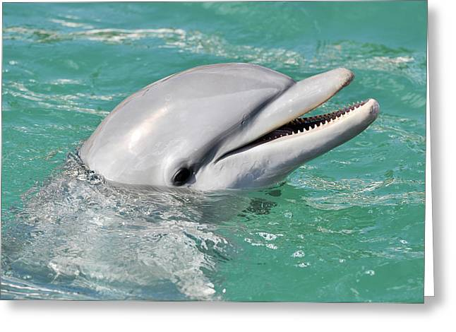 Seaworld Greeting Cards - Dolphin Smiling Close Up Greeting Card by Brandon Bourdages