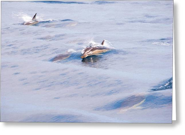 Aquatic Greeting Cards - Dolphins Playing Greeting Card by Roy Pedersen