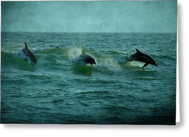 Panama City Beach Greeting Cards - Dolphins Greeting Card by Sandy Keeton