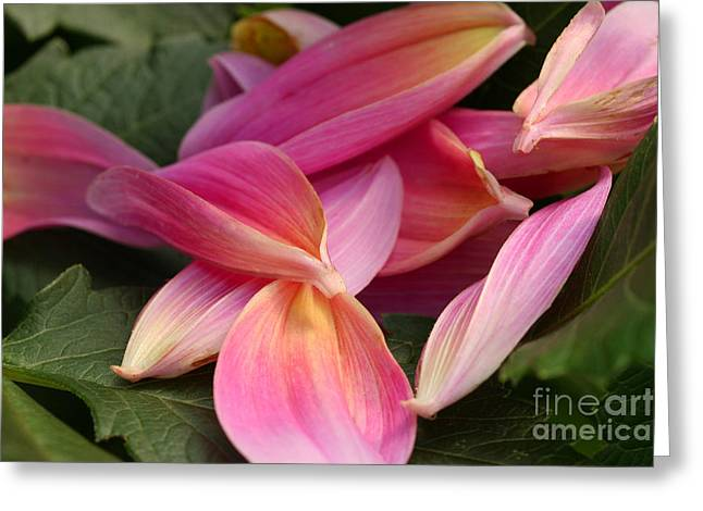 Done Blooming Greeting Card by Steve Augustin