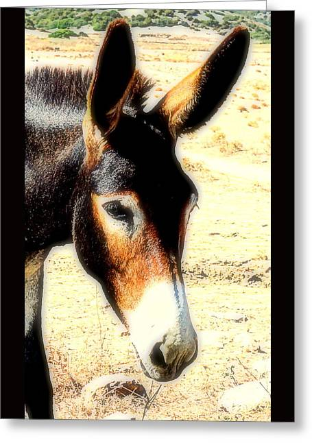 Temperament Greeting Cards - Donkey A   Greeting Card by Hilde Widerberg