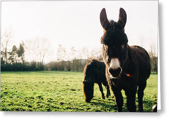 Donkey And Pony Greeting Card by Pati Photography