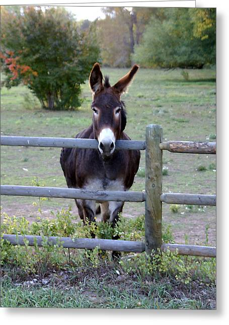 Donkey At The Fence Greeting Card by D Winston
