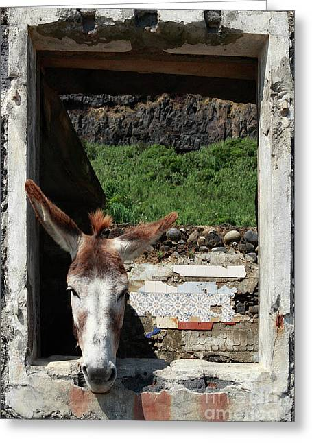 Ridiculous Greeting Cards - Donkey at the window Greeting Card by Gaspar Avila