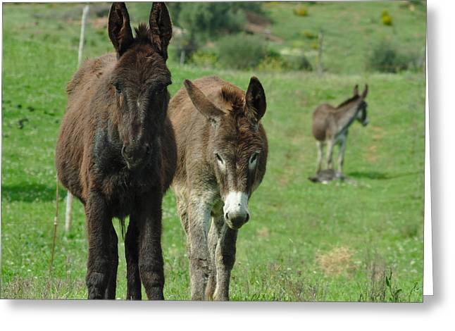 Europe Greeting Cards - Donkey Family Greeting Card by Angelo DeVal