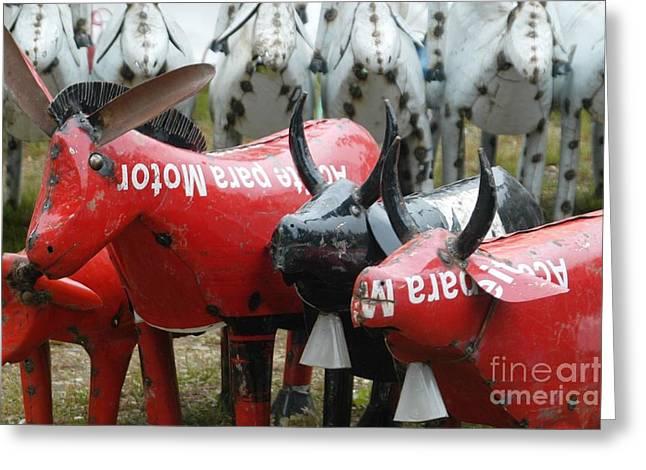 Brimfield Greeting Cards - Donkeys and Bulls at Brimfield Greeting Card by Amie Turrill Owens