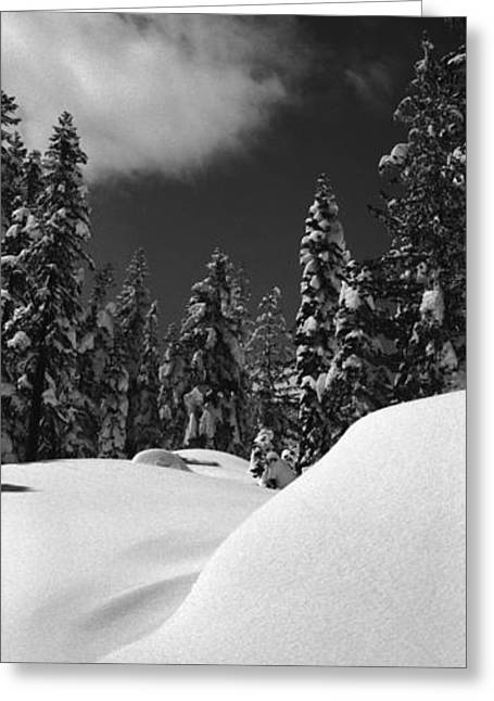 Light And Dark Greeting Cards - Donner One Greeting Card by Isak Photo