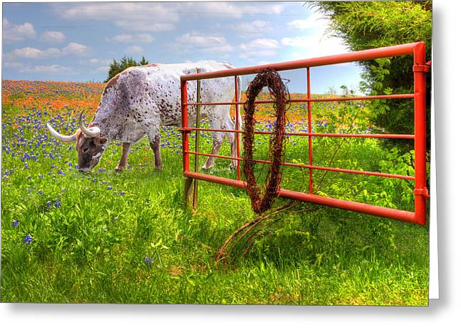 Steer Greeting Cards - Dont Fence Him In Greeting Card by David and Carol Kelly