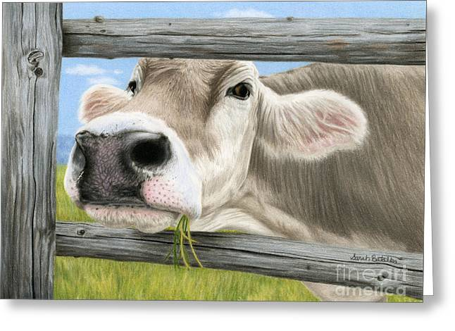 Cow Drawings Greeting Cards - Dont Fence Me In Greeting Card by Sarah Batalka