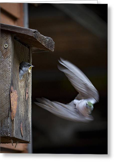 Baby Bird Greeting Cards - Dont Leave Greeting Card by Jean Noren