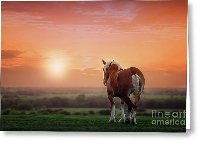 Don't Let The Sun Go Down On Me Greeting Card by Tamyra Ayles