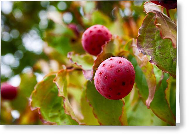 Recently Sold -  - Berry Greeting Cards - Dont Swallow Greeting Card by Mike Smale