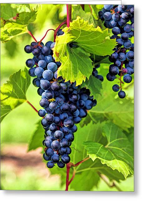 Blue Grapes Greeting Cards - Door County Grape Cluster Greeting Card by Christopher Arndt