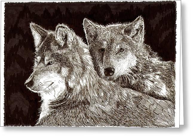 Wolves Drawings Greeting Cards - Dos Lobos y Amigas Greeting Card by Jack Pumphrey