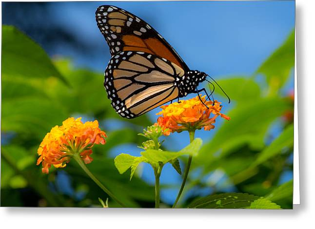 Nectar Greeting Cards - Dote Greeting Card by Don Spenner