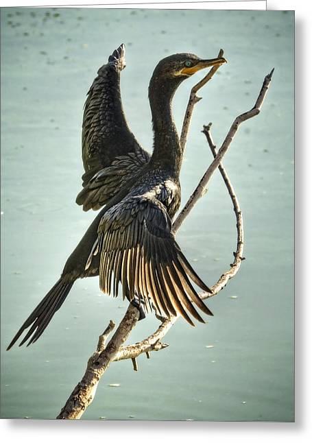 Double Crested Cormorant  Greeting Card by Saija  Lehtonen
