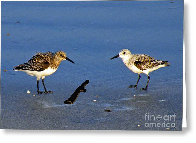 Shore Bird Print Greeting Cards - Double Dare You Greeting Card by Joe Jake Pratt