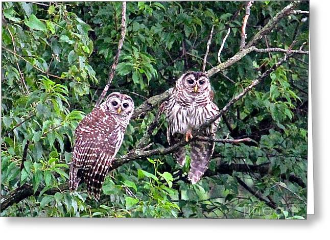 Double Perched Delight Greeting Card by Robin Erisman