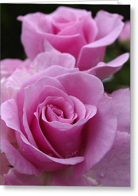 Tea Rose Greeting Cards - Double Take Greeting Card by Juergen Roth