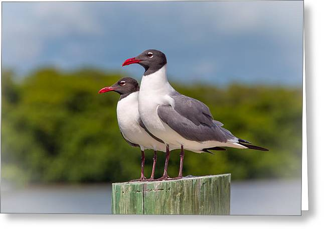 Flying Seagull Greeting Cards - Double Trouble Greeting Card by John Bailey