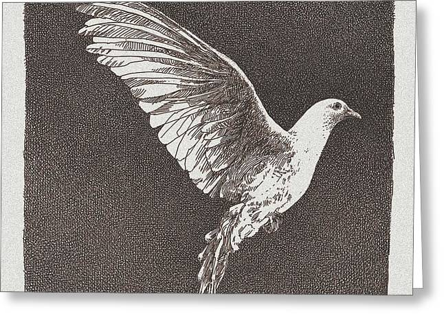 Warm Tones Greeting Cards - Dove Drawing Greeting Card by William Beauchamp