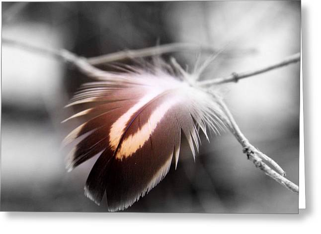 Tail Feather Greeting Cards - Dove Tail Greeting Card by Russell Styles