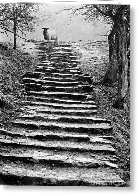 Midland Greeting Cards - Dovedale steps Greeting Card by John Edwards