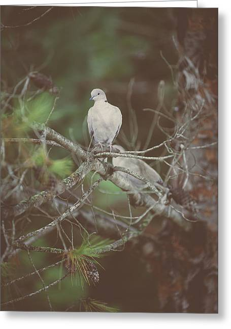 Doves In A Pine Tree Greeting Card by Marco Oliveira