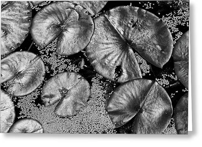 Dow Gardens Lily Pads 4 Bw Greeting Card by Mary Bedy