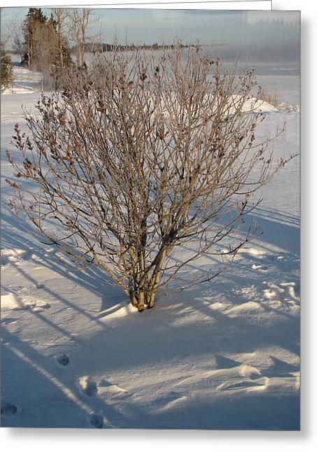 Winter In Maine Greeting Cards - Downeast Maine Greeting Card by Cat Encio