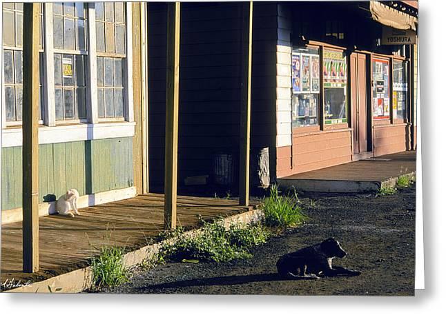 Kauai Dog Greeting Cards - Downtown Hanapepe Greeting Card by Nick Galante