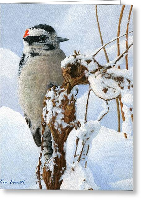 Woodpecker Greeting Cards - Downy Woodpecker  Greeting Card by Ken Everett