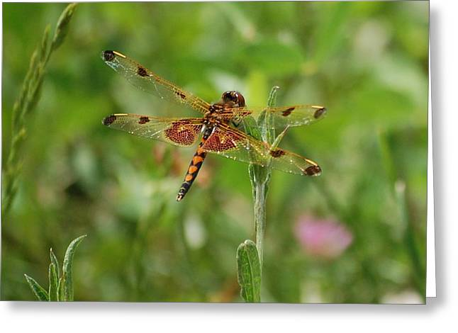 Dragon Fly Photo Greeting Cards - Dragon Flight Greeting Card by David Lane