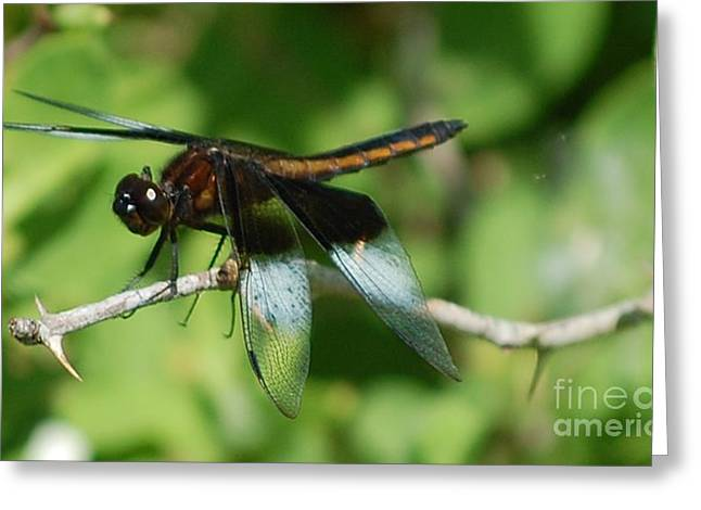 Dragon Fly Photo Greeting Cards - Dragon Fly Greeting Card by David Lane