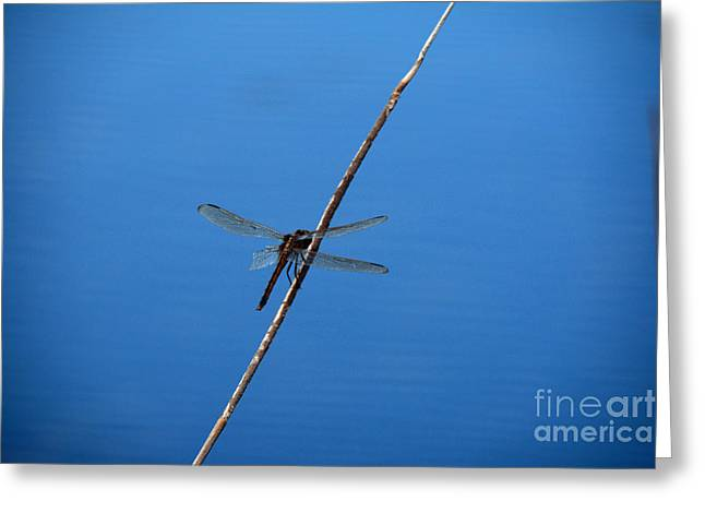 Dragon Tapestries - Textiles Greeting Cards - Dragon Fly Greeting Card by Edna Weber