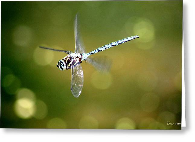 Dragon Fly In Flight Greeting Card by Nick Gustafson