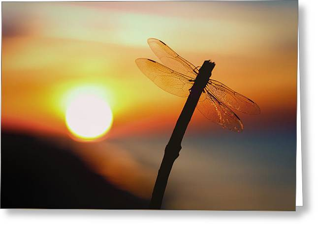 Reflection In Water Greeting Cards - Dragon Fly Summer Greeting Card by Gary Oliver