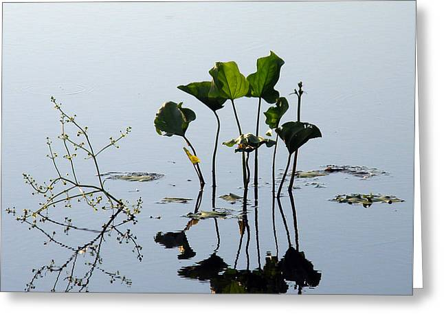 Lilly Pad Greeting Cards - Dragonfly Greeting Card by Albert Stewart